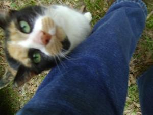 Bandit. Cool Cat.